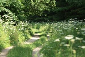 woodland-path-1435800-m